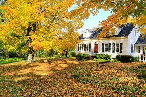 pest proofing home in the fall
